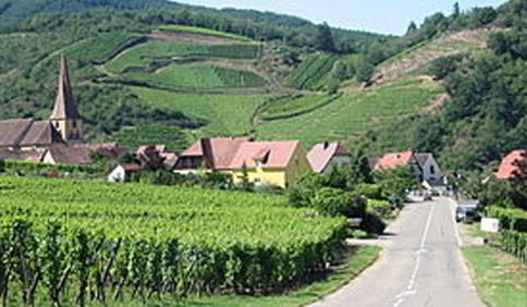 La région viticole d'Alsace